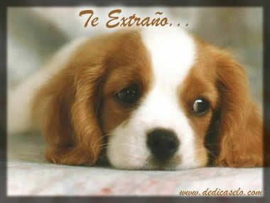 Image result for te extraño