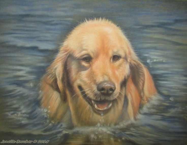 Roxy ~ Derwent Pastel on Velour paper , 8x10