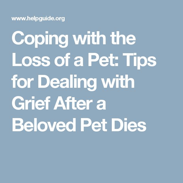 Coping with the Loss of a Pet: Tips for Dealing with Grief After a Beloved Pet Dies