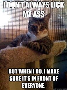 kitty keeps it real.: Same Animal, Funny Cat, I Don'T Always, Interestingcat, Funnycat, Funny Stuff, So True, Interesting Cat, Cat Meme