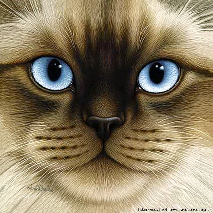 картинки кошачьи мордочки известно, точная