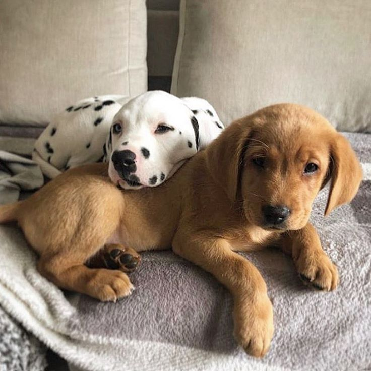 Awww 😍 Puppies 💖   Via @boris.and.doug  on Instagram