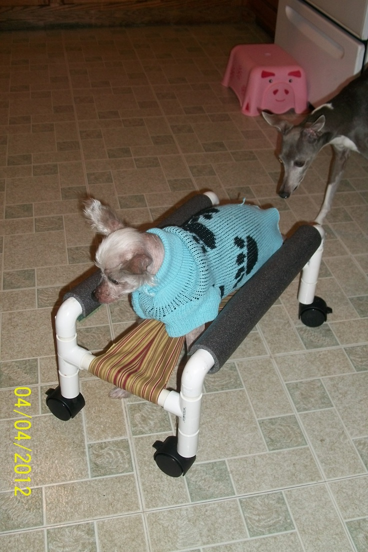 Marco trying out his wheelchair