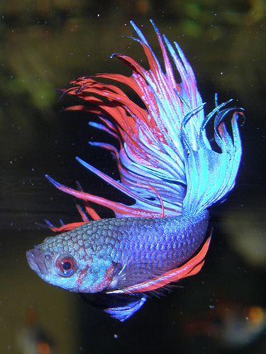 Top 5 Betta Fish Websites of 2009! | Betta Fish Care