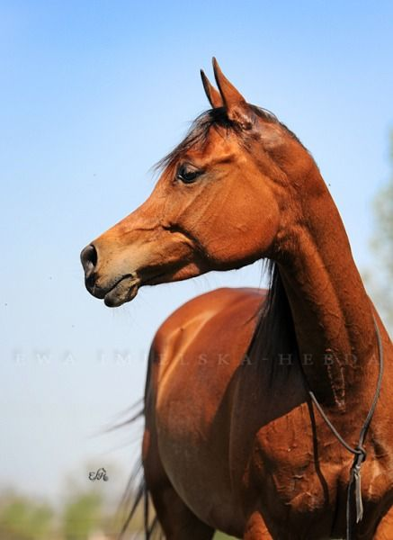 Beaches] Mustang horse for sale oregon