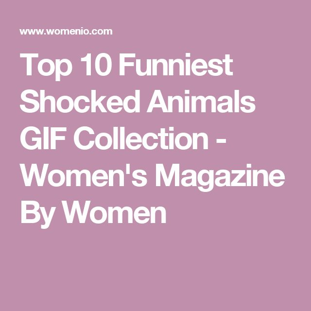 Top 10 Funniest Shocked Animals GIF Collection - Women's Magazine By Women