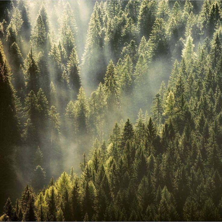 "Polubienia: 1,644, komentarze: 13 – @divine_forest na Instagramie: ""presents __________________________ @der_peste __________________________ Thank you for sharing…"""