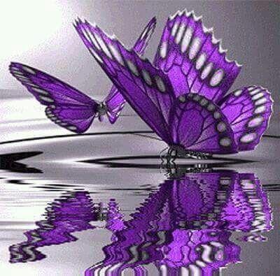 Lila fjäril.