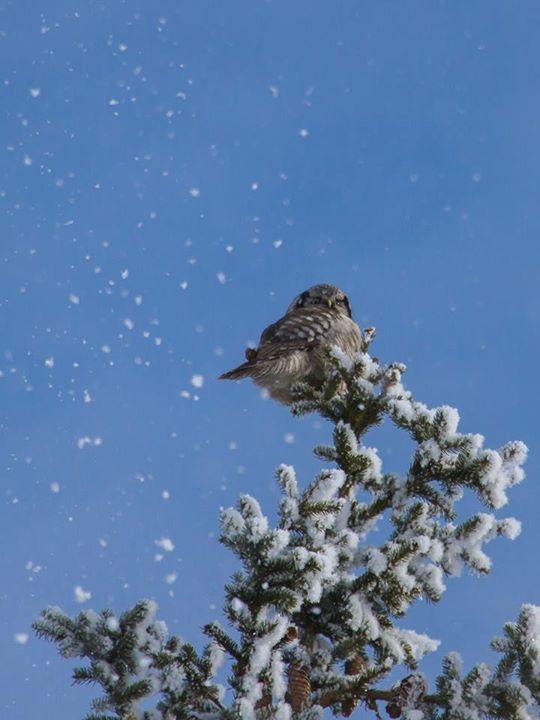 https://www.facebook.com/torpedoowl snow day with Torpedo Owl