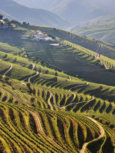 Terraced Vineyards - Douro Region, UNESCO WHS, Portugal Wines for Humanity has a wine from this region!