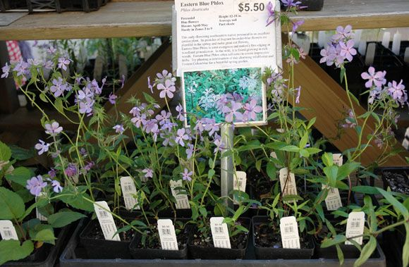Our Conservation through Propagation commitment includes our propagation activities. As a service to the public, and to provide financial support for our continuing research in propagation, we offer for sale a variety of potted herbaceous and woody plants.