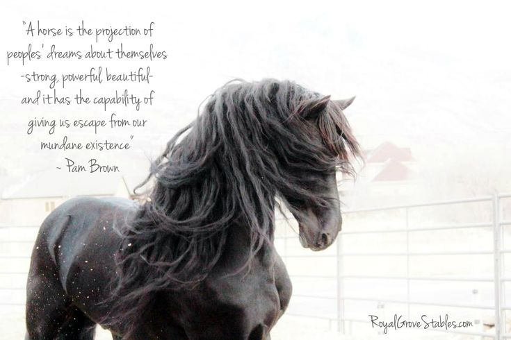 Quotes About Horses and Girls | All images are copywrite by Royal Grove Stables. )