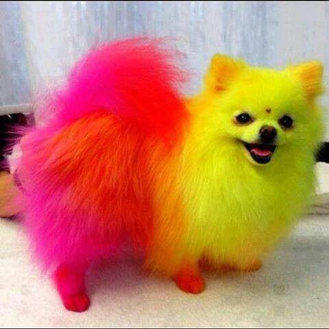 Uhm..omg ! Colorful dog !! :D
