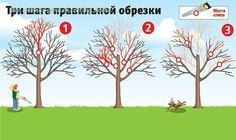 Плодовые деревья дают хороший урожай, когда они молодые. Но начиная с 15-летнего возраста их плоды заметно мельчают, урожайность падает, а сами растения чаще болеют. Омолодить ваш сад поможет обрезка.…