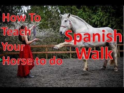 How to Teach Your Horse Spanish Walk/Paw [From start to finish] - YouTube