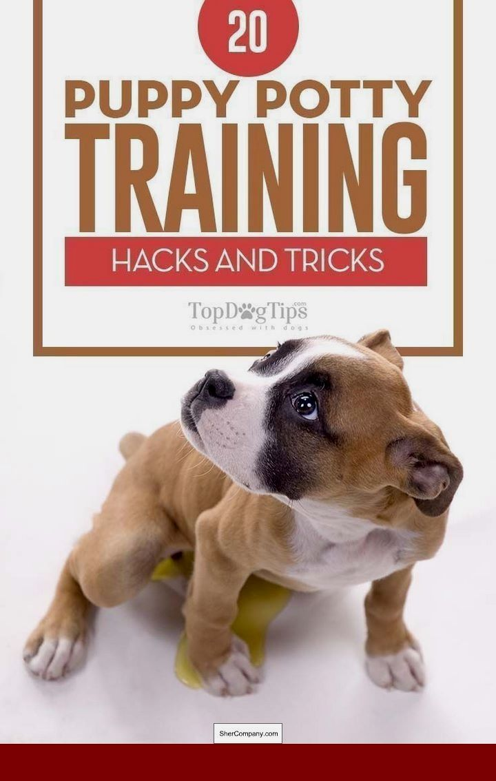 How To Train A Dog To Stay In A Cage Dog Dogtrainingtips Dog