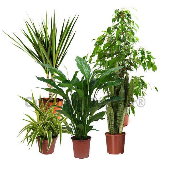 91 best images about jardin int rieur on pinterest planters cactus and spi - Spot plante interieur ...