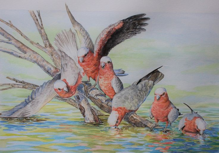 Denise Dean, painter. Galahs Drinking. Australian flora and fauna inspire the beautiful artworks of Denise Dean. Denise is an artist, graphic designer as well as an illustrator! She is exhibiting with us this year at Kathleen Berneys Studio, 31 Bloodwood Rd Arcadia.#painter #art  #artist #painting