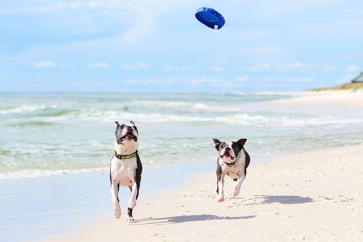 pet-friendly-off-leash-dog-beach-vacation