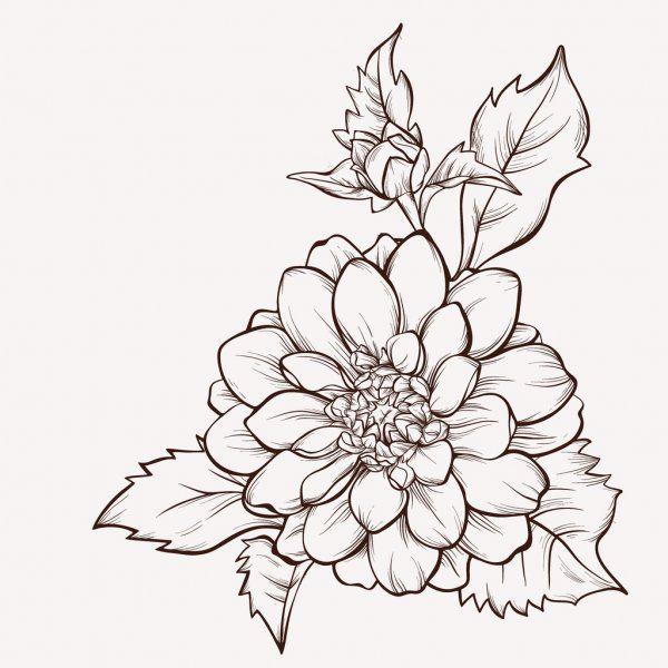 Vector Flower Isolated On White Background Hand Drawn Dahlia Flower Stock Illustration In 2020 Vector Flowers Dahlia Flower Tattoos Flower Line Drawings
