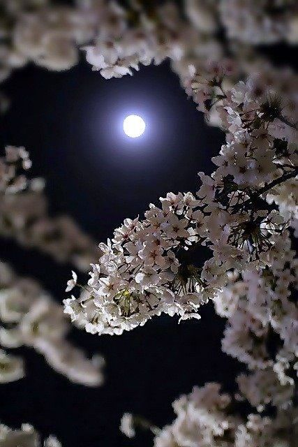 """""""Aim for the moon. If you miss, you may hit a star."""" -W. Clement Stone"""