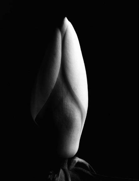 Imogen Cunningham, Magnolia Bud  #photography #blackandwhite #flowers
