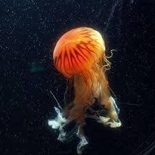 Resultado de imagen de animales mar