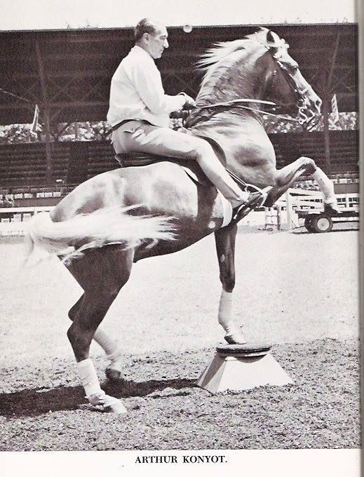 "Arthur Konyot trained ""Goldie"", a renowned palomino trick horse for Arthur Godfrey."