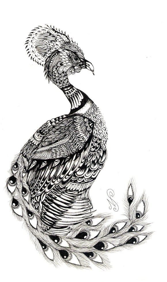 17 best images about peacocks on pinterest peacocks two for Peacock tattoo black and white
