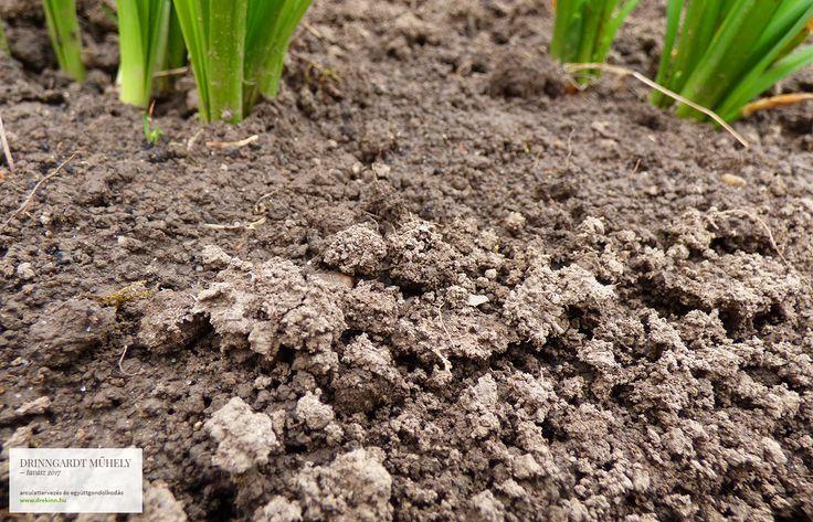"""Földmunkák, amik a kertbe csalogatják a rigókat és verebeket... metszés és lemosó permetezés, kéregkaparás, a tövek megtisztítása - ilyen, és ezekhez hasonló munkákkal indul a tavasz mindazoknak, akik tudják, mit jelent """"együtt gondolkodni a természettel""""... Drinngardt Tavasz 2017"""