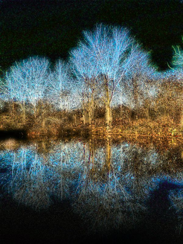 fantasy art trees   Glowing tree reflected in water - - Adding some fantasy - Ida Lee Park ...