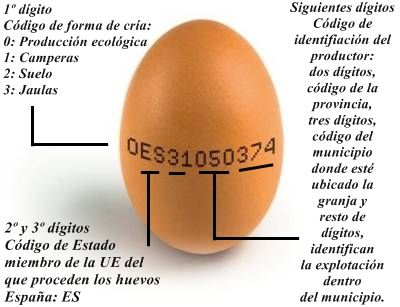El huevo, alimento completo desde el punto de vista nutricional