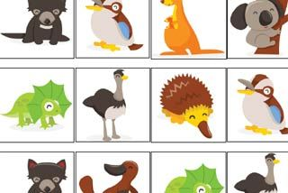 Australian animal memory game for all books about Aussie animals