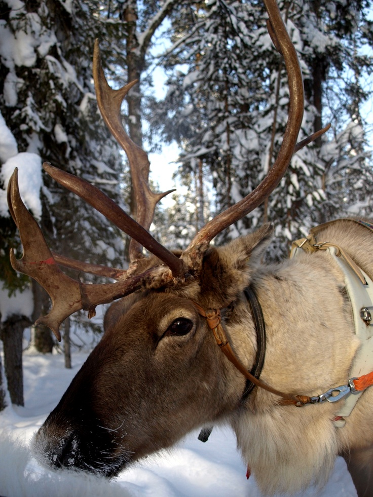 Levi Finland-Lapland