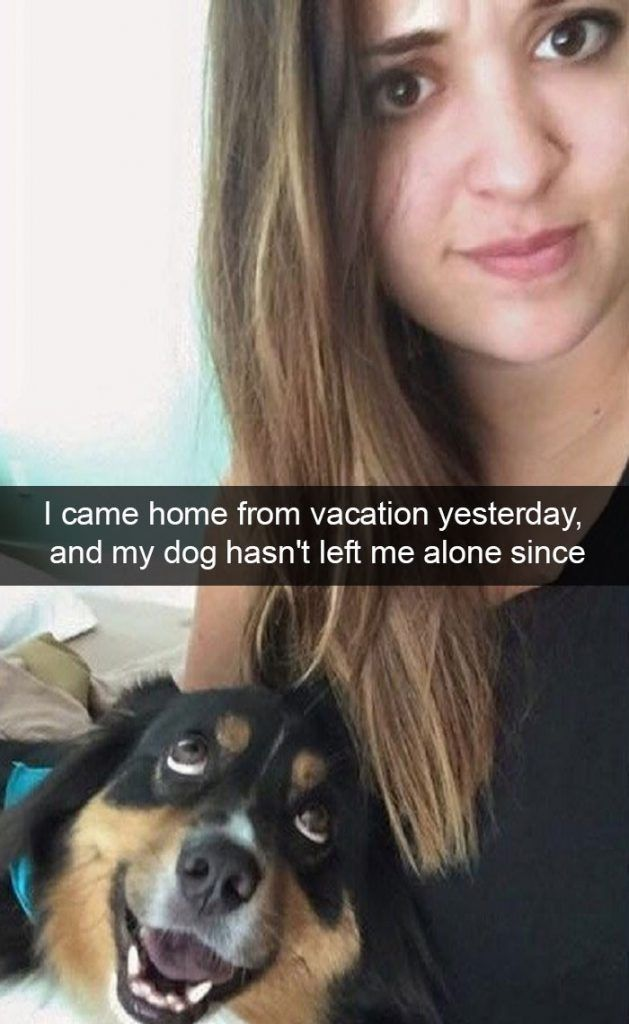150 Funny Animal Snapchats Pictures – Funnyfoto | Funny Pictures - Videos - Gifs - Page 11 #funnydogquotes #funnycatsfails