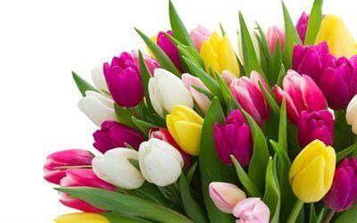 Scarica sfondi mazzi di fiori, tulipani, un gran mazzo
