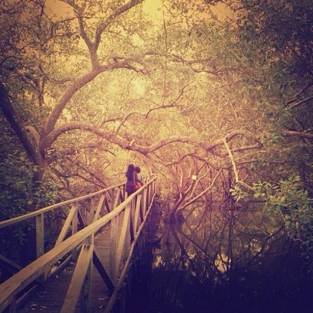 Mangrove, Balikpapan, Borneo. @kenyokania-#statigram