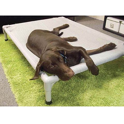 make this out of pvc for the dek during the summer for the dogs to lay on coolaroo aluminum frame elevated pet bed bed bath u0026 beyond