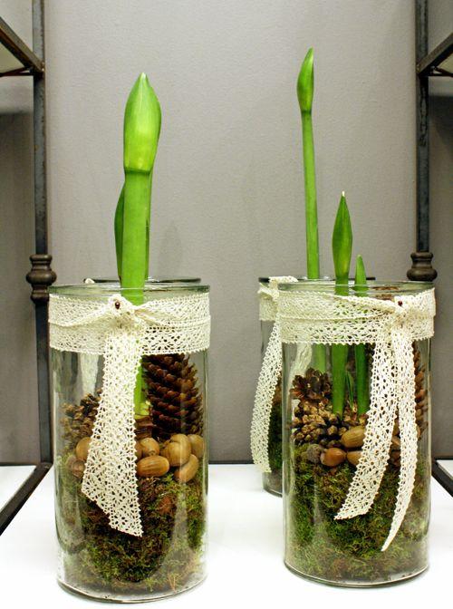 http://holmsundsblommor.blogspot.se/2011/12/skogsinspirerat.html Amaryllis i hög glasvas med mossa, ekollon och kottar