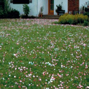 Northern Ecology Lawn Mix Herbs And Rare Seeds Nichols Garden Nursery