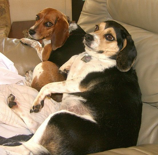Five Fat Dog Breeds-  lots of good pet info on this site.