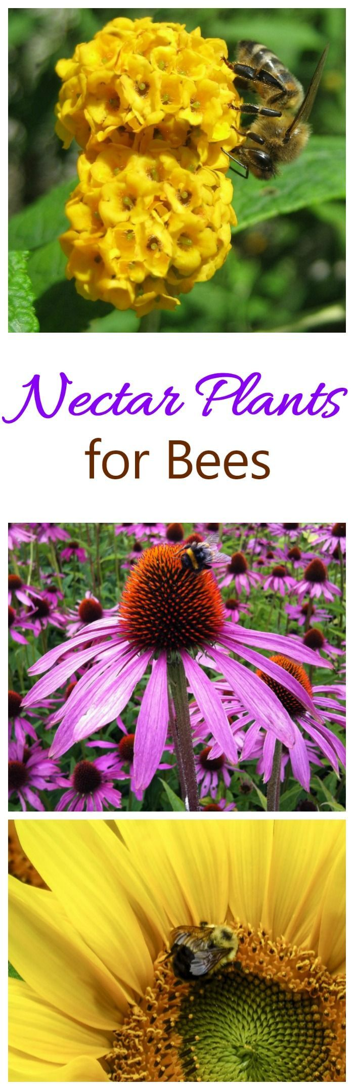 Nectar Plants that attract bees