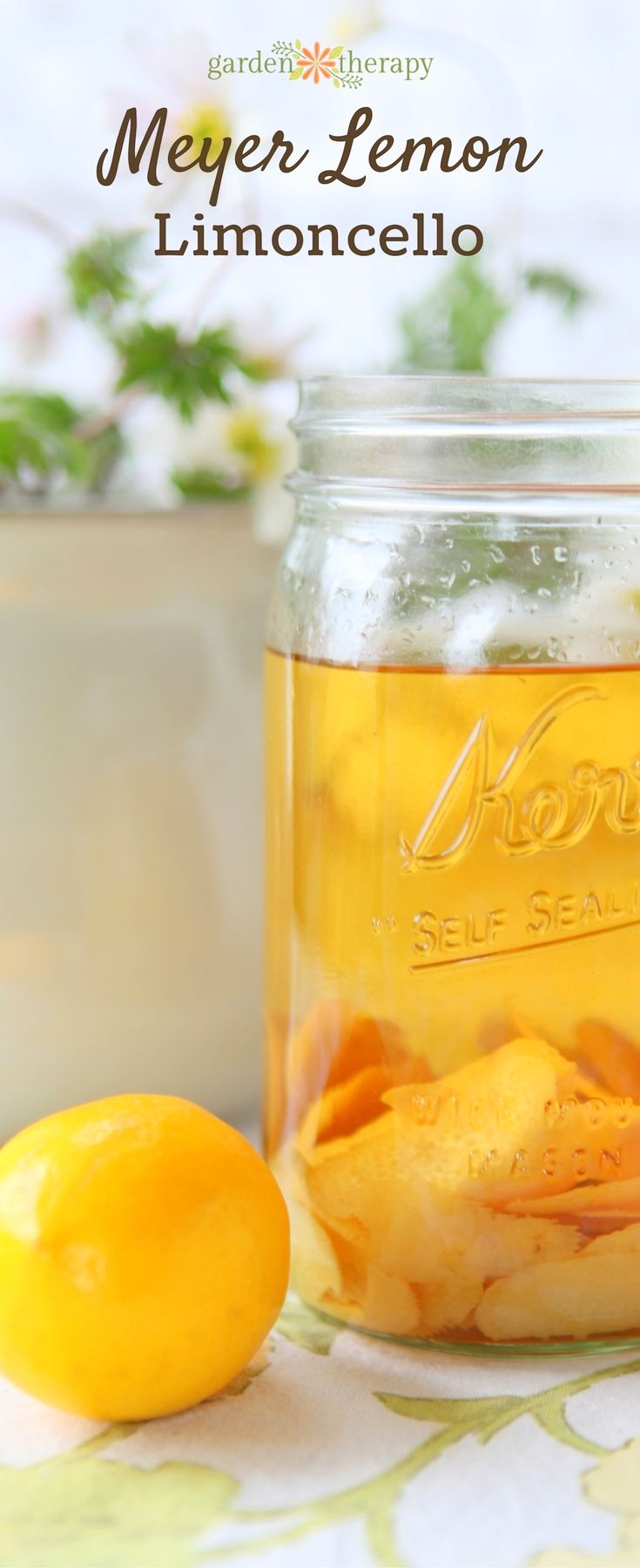 How to make Meyer lemon lemoncello.