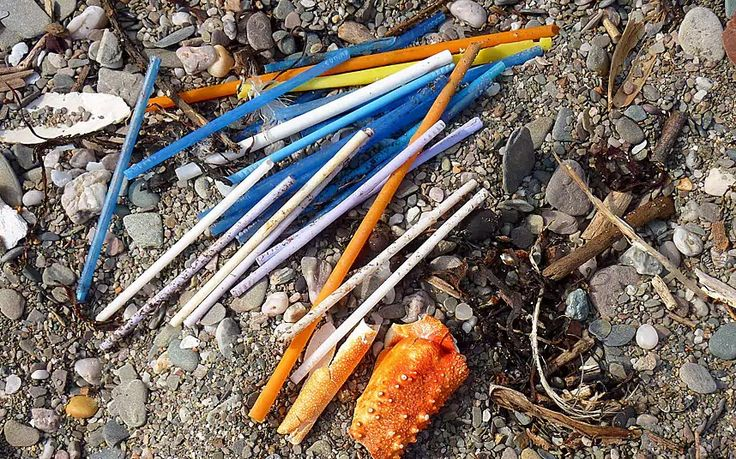 """O plástico que vai parar ao mar não é só um problema para a vida marinha. Quando este material entra na cadeia alimentar, """"acaba no seu prato""""."""