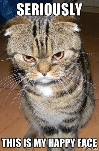 questioning face cat - photo #10