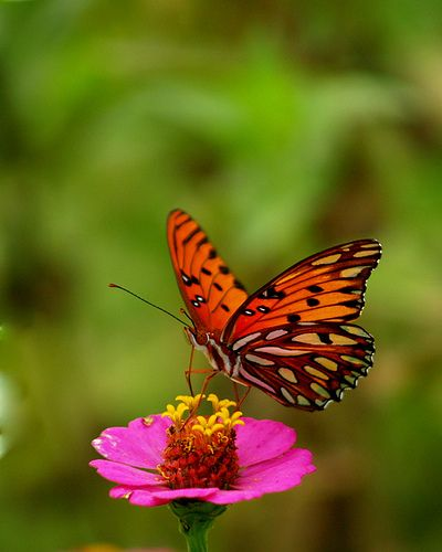 170 best images about Butterflies & Dragonflies on ...