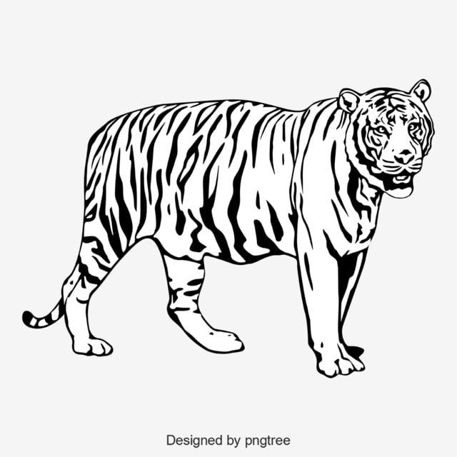 Black And White Tiger Body Image Silhouette Animal Monochrome Png And Vector With Transparent Background For Free Download Hitam Dan Putih Png Siluet