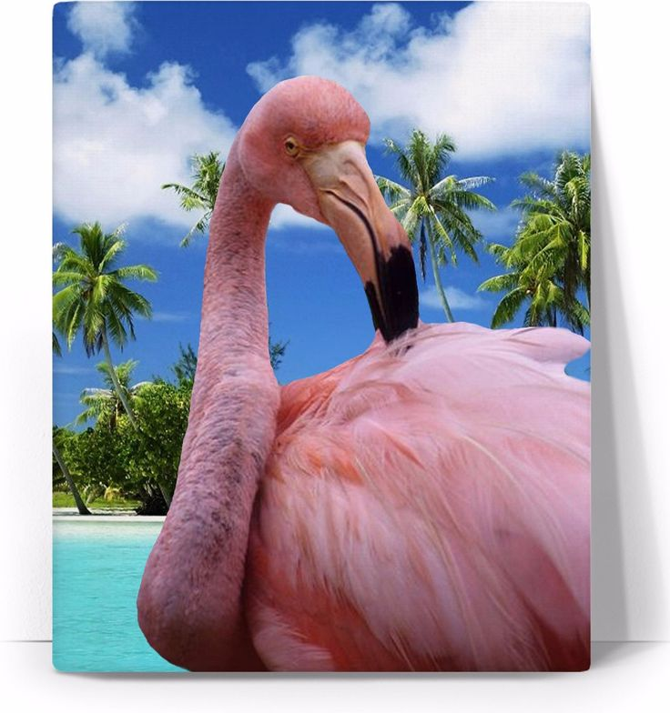 Check out my new product https://www.rageon.com/products/flamingo-and-beach-art-canvas-print-1?aff=BWeX on RageOn!