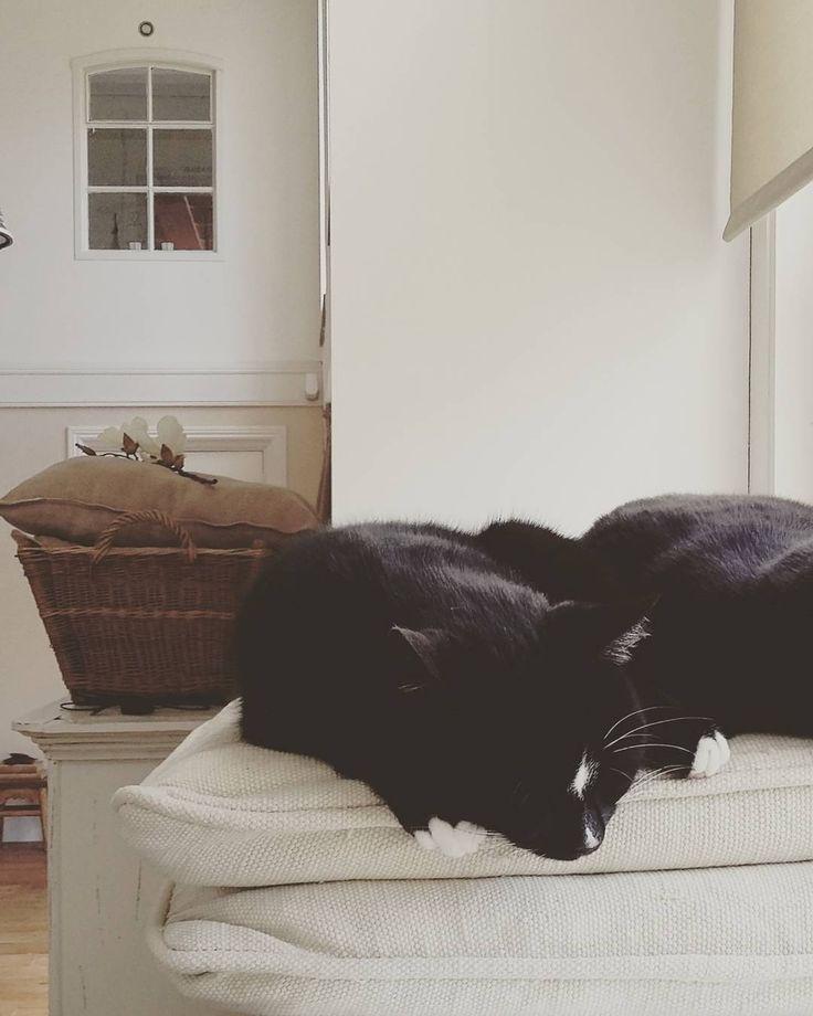 Een kattenleven; dat lijkt me soms wel wat #cat #kat #slapen #sleep #home #fabriek #factory #brocante #sfeer #sfeervolwonen #stalraam #koesfabriek #white #wit #blackandwhite