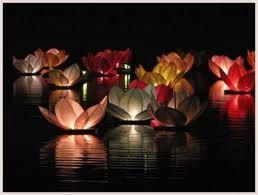 www.hochzeit.at hochzeitsforum flohmarkt wasserlaternen-lotusblute'helles-turkis-und-weiss' msg487533 ?PHPSESSID=dfutibgqiv0n23kan1bs3k53d1